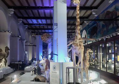 MUSEE D'HISTOIRE NATURELLE DE MARSELLA